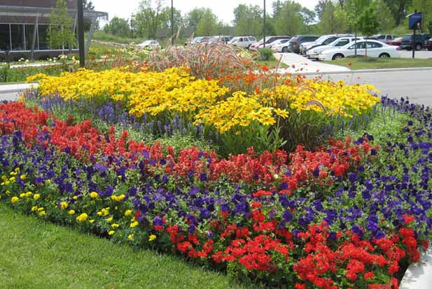 Annual flowers color programs niwa design studio ltd for Large flower bed design ideas